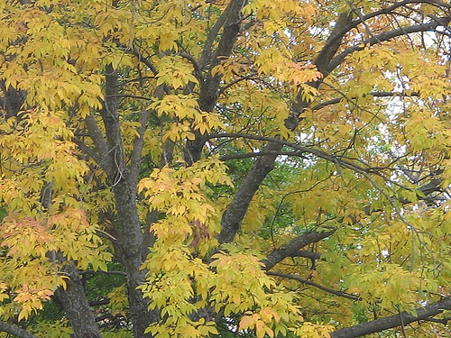 Autum Tree in Lawrence