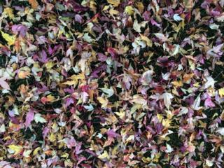 Autumn Leaves in Jackson