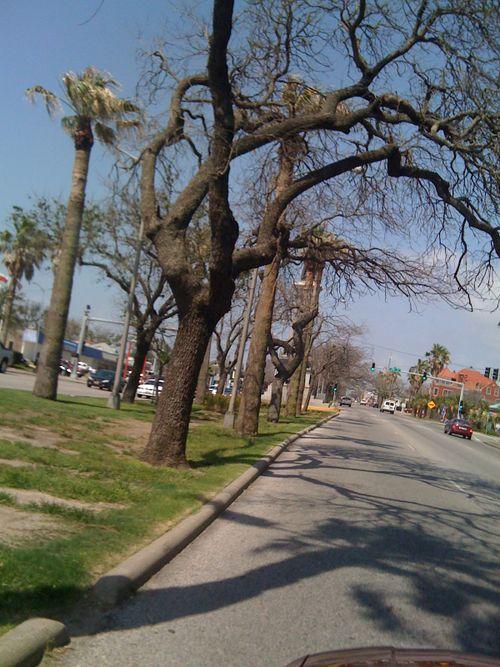 Galveston Garden 011