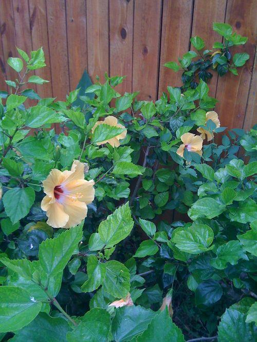 Galveston Garden 012
