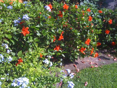 Galveston Garden 026