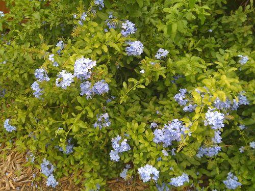 Galveston Garden 033