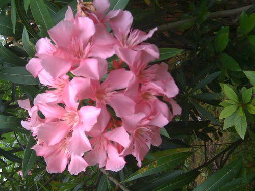 Galveston Garden 034