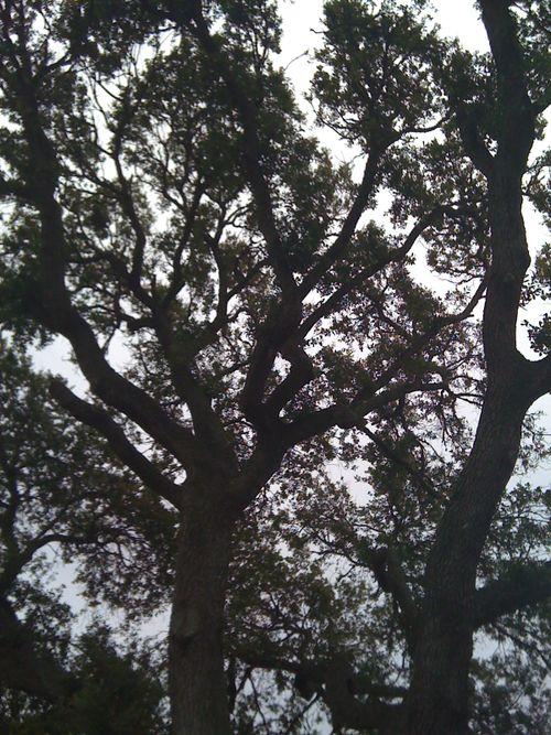 Galveston Garden 035