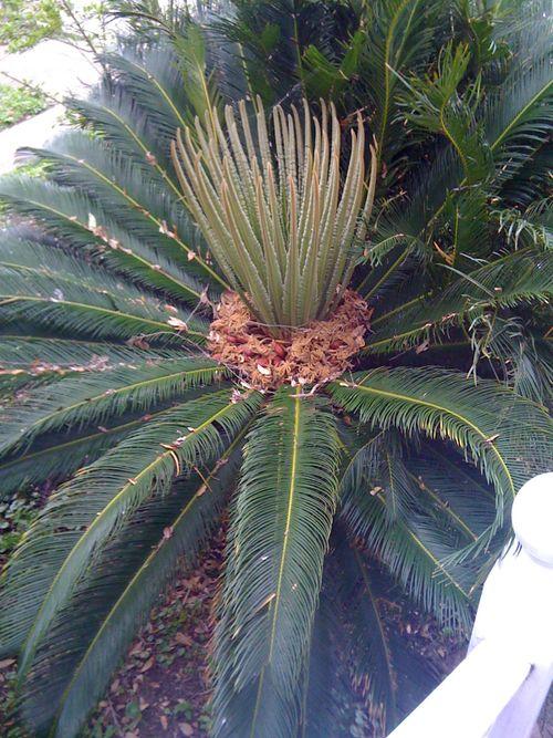 Galveston Garden 036
