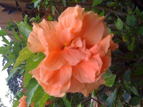 Galveston Garden 039