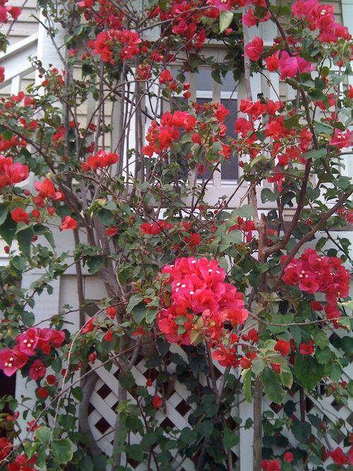 Galveston Garden 047