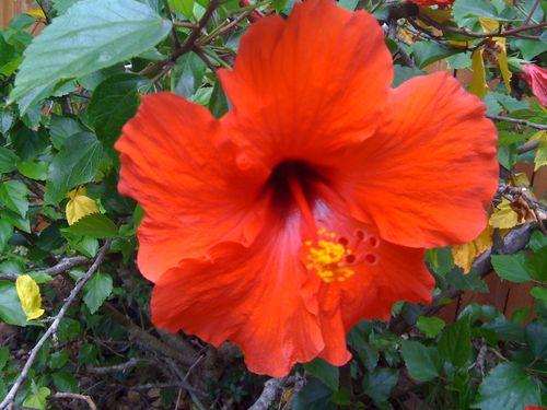 Galveston Garden 049