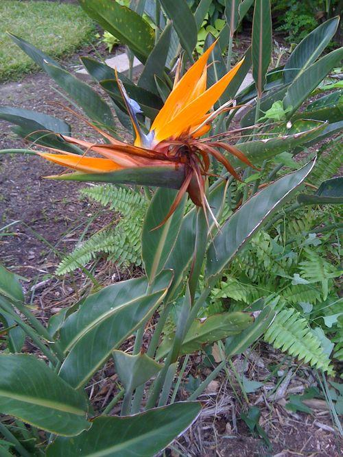 Galveston Garden_1254